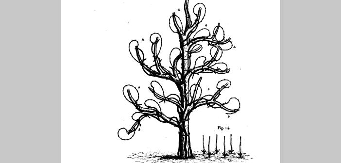 Sur le viticulture et la vinification du canton d'Evian dr Jules Guyot 1868 p24